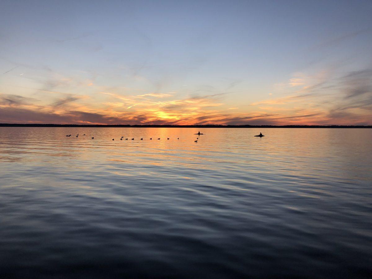 Eastern NC Waterfowl Hunting